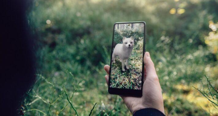 Google samarbetar med Naturskyddsföreningen – visar utrotningshotade svenska djur i 3D